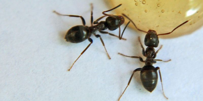 7 Best Pet Safe Ant Killers Effective Yet Harmless To Pets