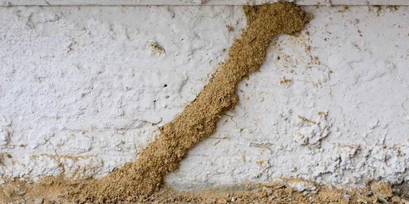 9 Best Termite Treatments Killers Sprays For Home Use